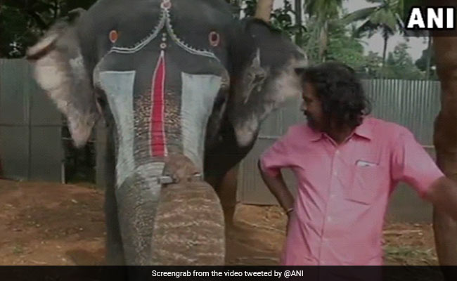 In Tamil Nadu, Elephant Plays Harmonica. Don't Miss This Delightful Video