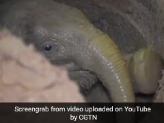 Watch: How Villagers Helped Rescue Baby Elephant Trapped In Well