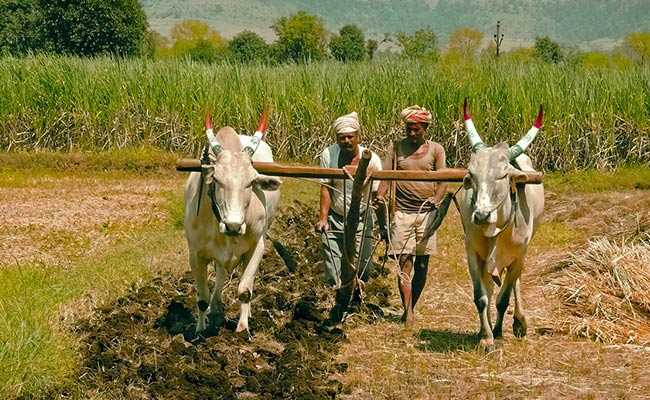 Andhra Pradesh's Battle To Save Farmers - From Illegal Seeds
