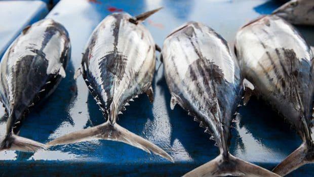 fish flip