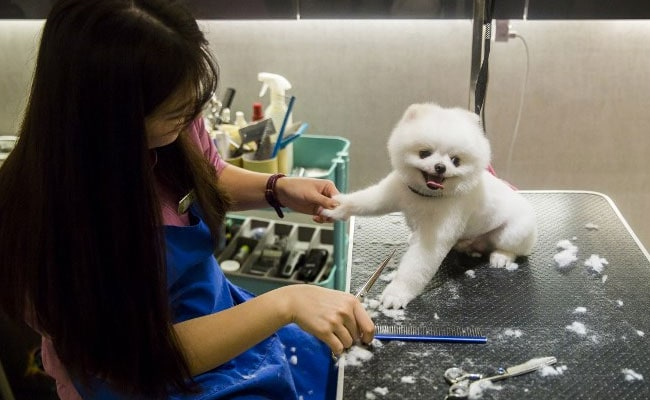 Milk Spas And Manicures: Meet Hong Kong's Pampered Pooches