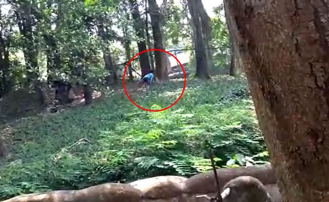 Man Jumps Into Lion Enclosure In Kerala Zoo. Rescued Just In Time. Watch
