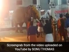 Elephant Runs Amok At Kerala Temple, Mahout Pulled To Safety