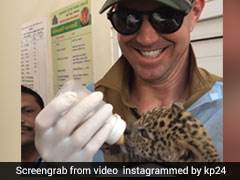 Watch: Kevin Pietersen Adopts Baby Leopard In India, Earns Plaudits On Social Media