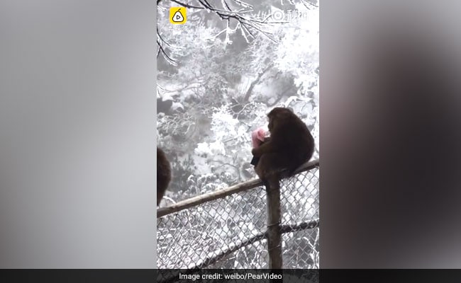 Monkey Snatches Tourist's Wallet, Throws Away All The Cash. It's On Video