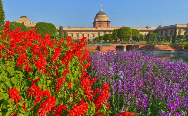 10, 000 Tulips, Over 130 Varieties Of Roses At the Mughal Gardens This Year