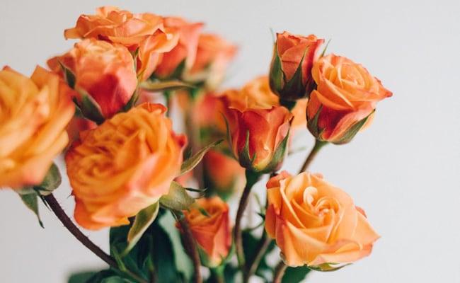 orange roses rose day