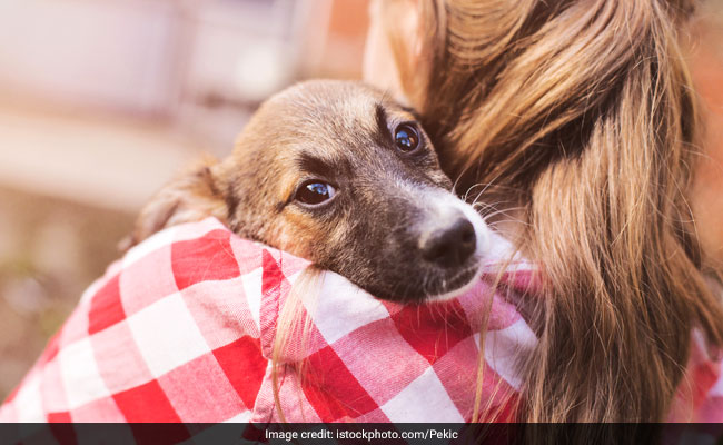 Pets May Help People With Mental Health Issues; These Foods May Help Too!