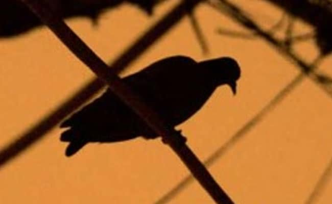 Bengaluru Teen Allegedly Stamps Toddler To Death Over A Pigeon
