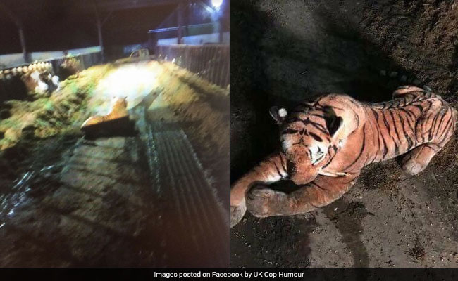 45-Minute Standoff With Tiger Ends When Police Realise It's A Stuffed Toy