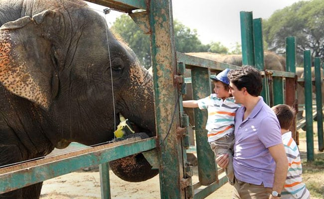 The Justin Trudeau Family Meets Maya, Bijlee And Lakshmi - The Elephants At Mathura Wildlife Sanctuary