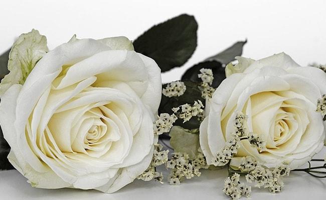 white roses rose day