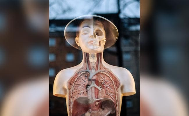 Scientists Just Discovered A New Human Organ. It Might Be The Biggest One