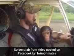 Viral: This Pilot Rescued A Baby Chimp And Everyone Swooned