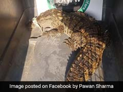 4.4-Feet-Long Crocodile Rescued From Drain In Mumbai. Watch Video