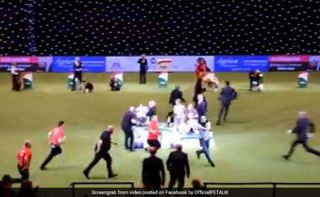 Britain's Fanciest Dog Show Had Just Named Its 'Best In Show.' Then PETA struck.