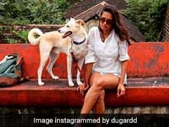 Delhi Woman Is Travelling Across India With Her Dogs. See Their Journey