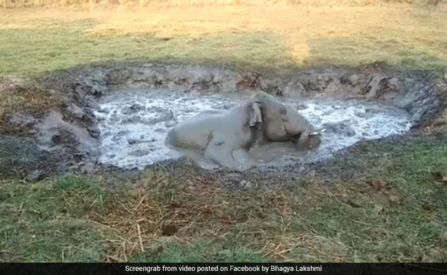 In Karnataka, Elephant Stuck In Swamp 'Screamed All Night For Help'. Watch The Rescue