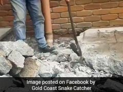 Family Destroys Backyard Trying To Get Rid Of Deadly Snake. Watch