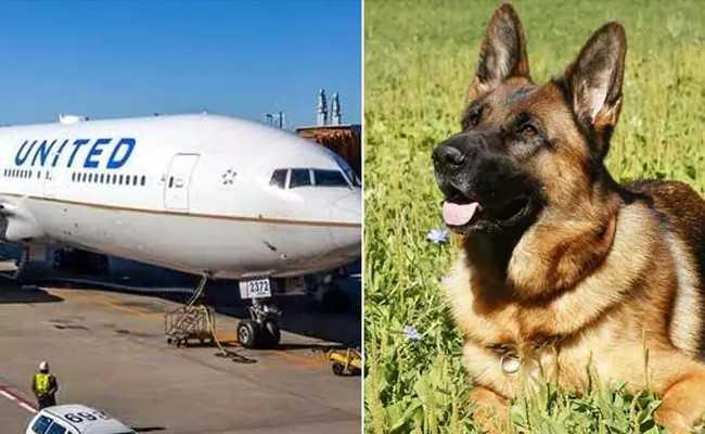 जब प्लेन में हुई एक कुत्ते की गलती से 'हेरा-फेरी', तो एयरलाइन ने मांगी माफी