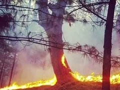 Massive Forest Fires In 4 Districts Of Jammu And Kashmir