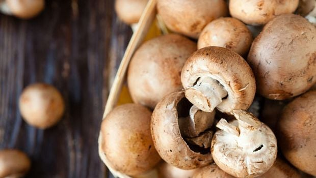 How Mushrooms Can Aid In Diabetes Treatment