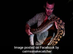 Couple Finds Python The Size Of A Car In Drive-Way, Call For Help