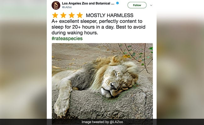 Zoos Are Tweeting Amazon-Like Reviews Of Animals And They Are Hilarious