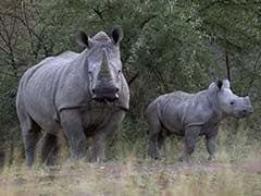 Nepal's K P Sharma Oli Gifts A Pair Of One-Horned Rhinos To China