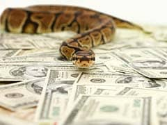 Millions Stolen In Nigeria. Accused - A Snake And Gang Of Monkeys
