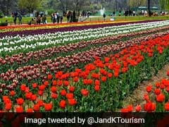 Jammu And Kashmir Turns To Tulip Garden, Dal Lake To Revive Tourism