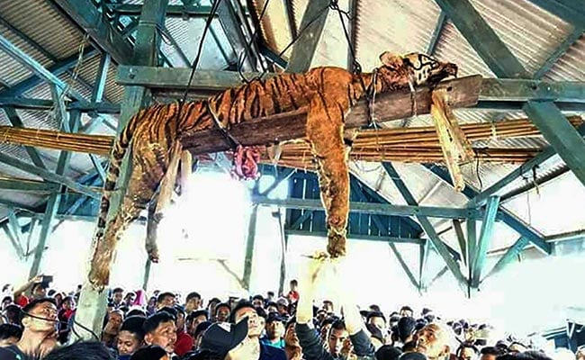 Sumatran tiger killed and hung after Indonesian villagers feared it was 'shapeshifter'