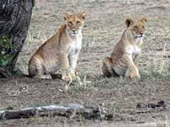 Blog: My Surreal Tanzanian Safari Experience