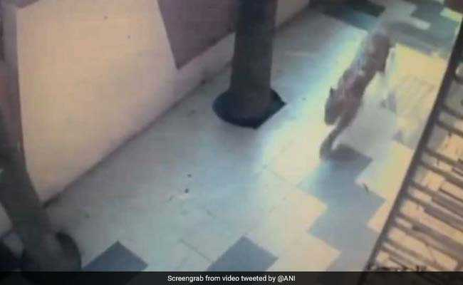 Leopard Strays Into Residential Area In Thane, Causes Panic Among People