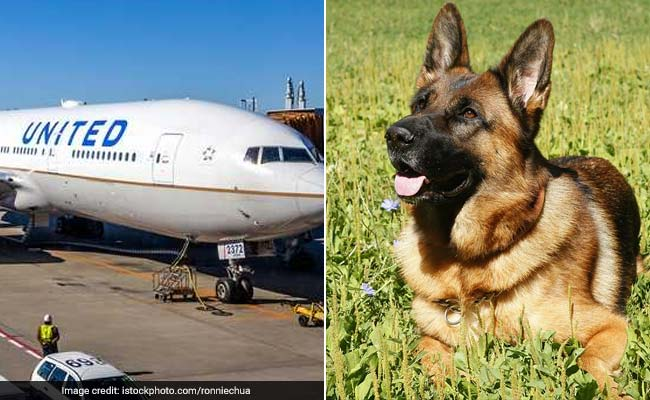 Family Flies German Shepherd On United Airlines. Gets A Great Dane Back