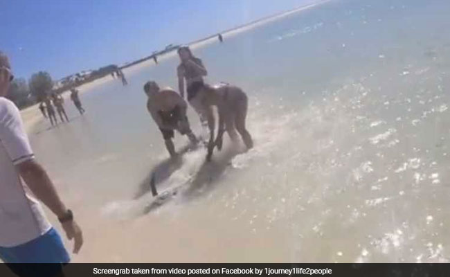 Video: Woman Helps Beached Marlin Fish Back Into The Sea