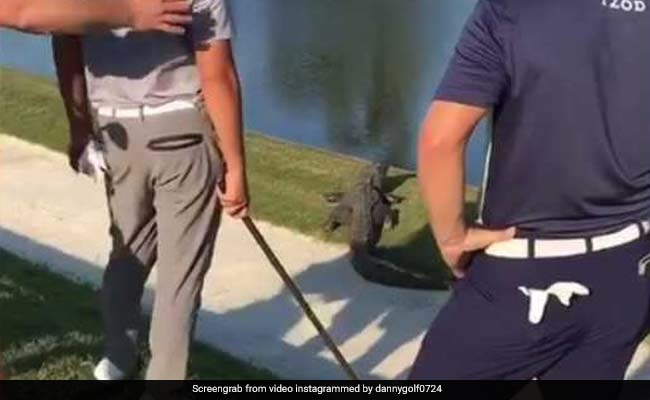 Golfer Comes Dangerously Close To Alligator While Playing. Watch