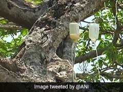 Dying 700-Year-Old Banyan Tree In Telangana Put On Drip. See Pics