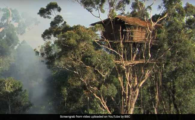 BBC Made Documentary On African Korowai Tribe  Now They Say Scenes