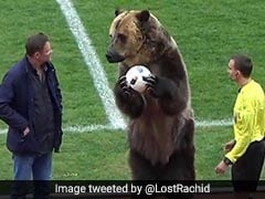 Watch: Russian Football League Blasted After Grizzly Bear Hands Match-Ball To Referee