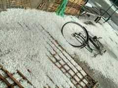 बिहार में भयंकर ओलावृष्टि ने तोड़ी किसानों की कमर, गेहूं के साथ आम-लीची की फसल बर्बाद, देखें तस्वीरें
