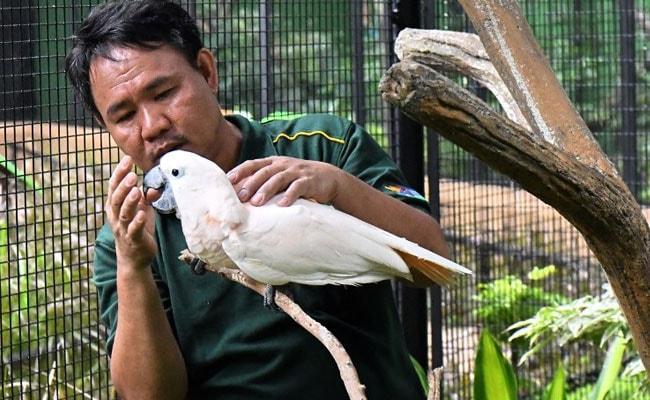 bird whisperer afp 650 2