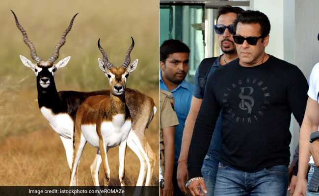 Salman Khan Guilty Of Killing Blackbucks That Are Worshipped By Bishnois