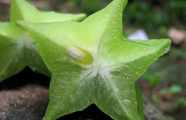 carambola fruit or star fruit