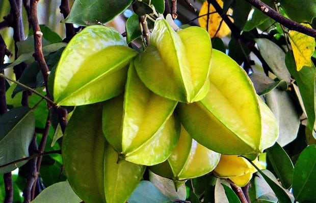 Carambola Fruit For Health: 6 Impressive Health Benefits Of Eating Star Fruit For Diabetes, Heart And Digestion
