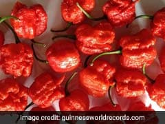 World's Hottest Chilli Pepper Carolina Reaper May Have An Indian Connection
