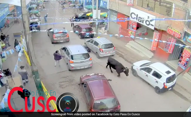 Video: Bull Escapes Enclosure, Runs Through Streets And Shopping Mall
