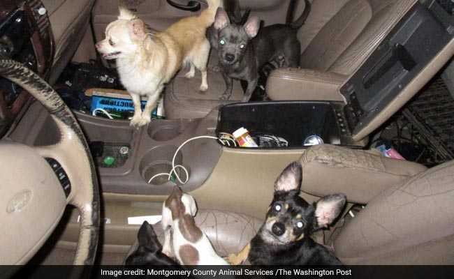 33 Abused Chihuahuas Found In Maryland SUV, Owner Says