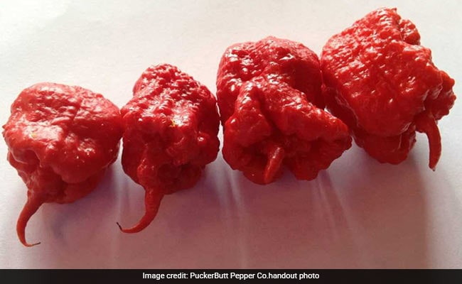 Defending The Worlds Hottest Pepper Carolina Reaper A Grower