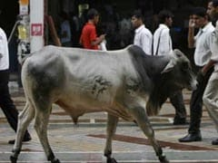 Muslim Woman Gets Threats From Family For Running A Cow Shelter